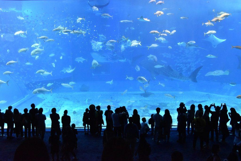Akwarium na ferie