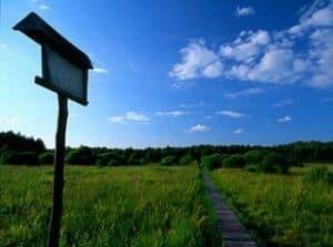 Ścieżki dydaktyczne Poleskiego Parku Narodowego