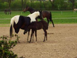 Janów Podlaski - stadnina koni