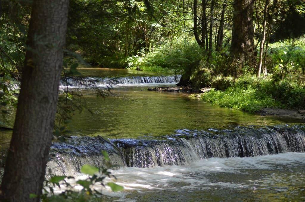 Roztocze - rzeka Tanew