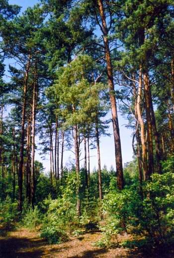 Mazowiecki Park Krajobrazowy